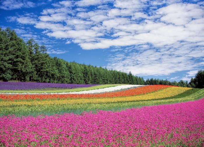 Qualité image fond d'écran gratuit fleurs fleur fond ecran