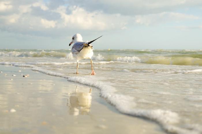 une mouette qui marche sur la plage, sur une onde mousseuse, ambiance sereine de vacances, destination paradisiaque