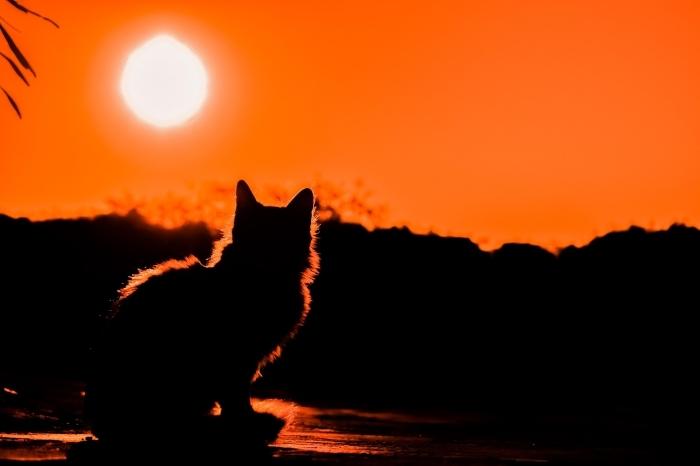 idée pour un wallpaper fond d écran à design animal, petit chat qui observe la nature et le coucher du soleil