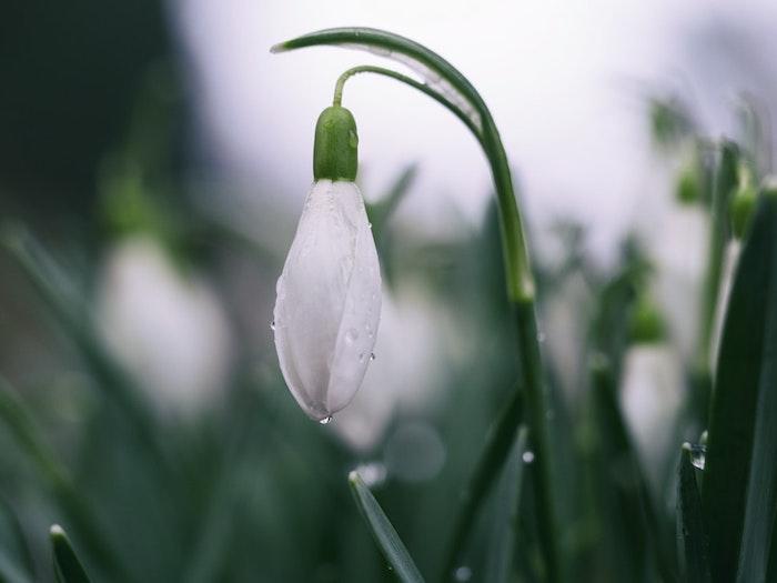 Paysage de printemps fond ecran fleur fond d'écran jolie photo perce neige printemps