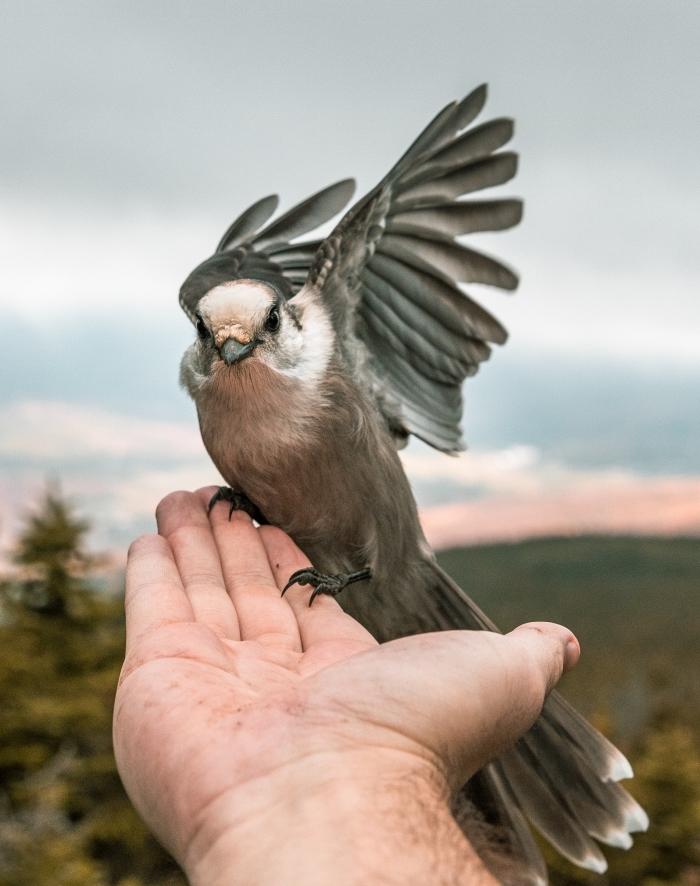 main masculine qui tient un petit oiseau à fond d écran paysage au ciel gris et rose avec champs et arbres verts