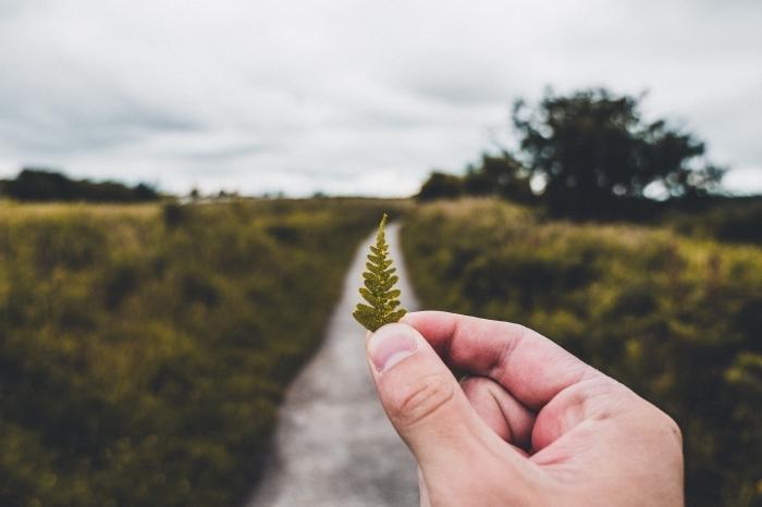 sentier dans les champs verts, main masculine avec petite feuille verte devant un paysage rural au ciel de nuages