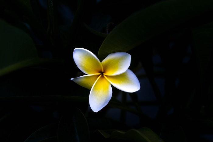 Fleur fond ecran tablette fond d'écran images fleur photo belle idée fond d'écran image fleur macro