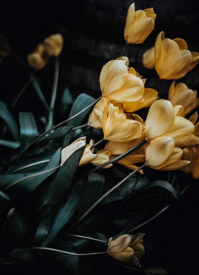 Formidable image de fleur fond d'écran gratuit printemps tulipes jaunes