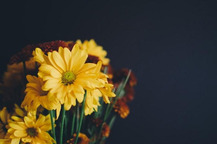 Géant image de fleur fond d'écran fleuri image fond d'écran fleurs jaunes