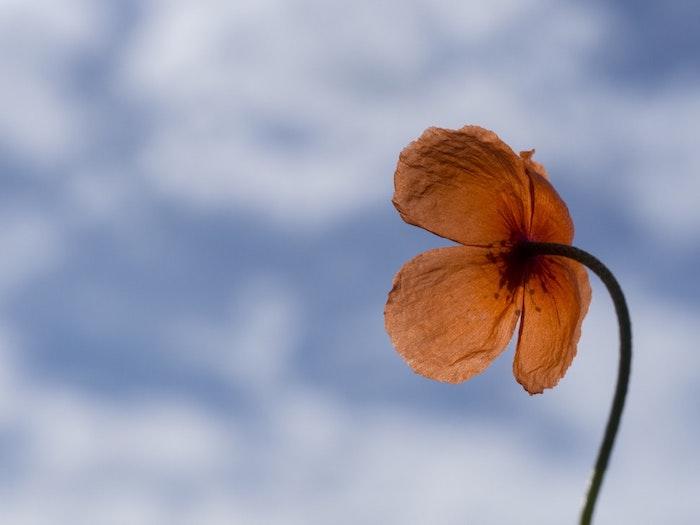 Photo bouquet de fleurs fond d'écran fleuri photo jolie coquelicot rouge image ciel et fleur