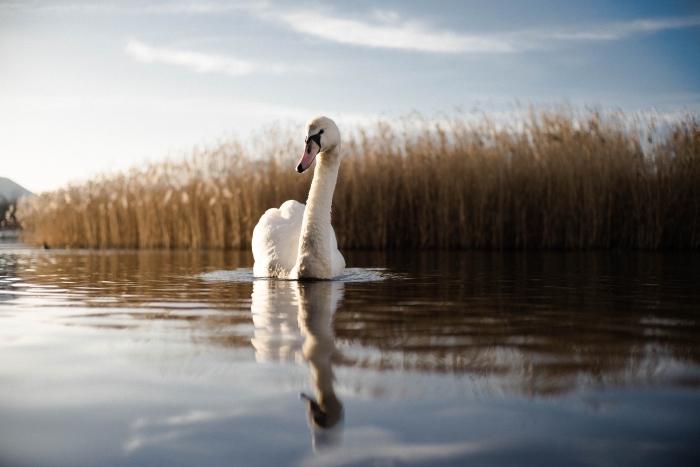 1001 Photos Pour Un Fond D écran Nature Merveilleux