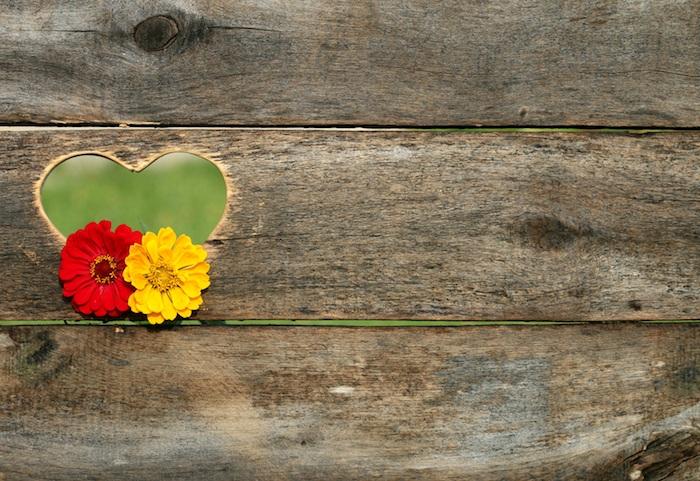 Coeur trou de banc en bois avec fleurs photos martinique fond d'écran image