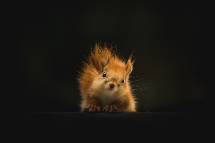 exemple de fond d écran jolie avec petit animal, photo de petit écureuil mignon à fourrure blanc et marron