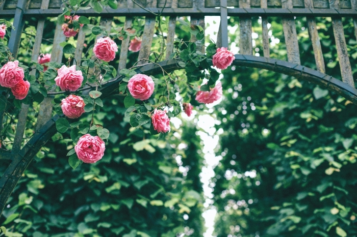 photo d'arc floral avec roses rose, fond d écran beau avec fleurs et arbres vertes, image de la flora verte pour fond d'écran
