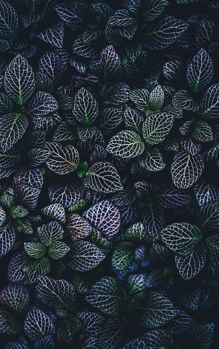Image de fleur fond d'écran printemps idée fleur photo
