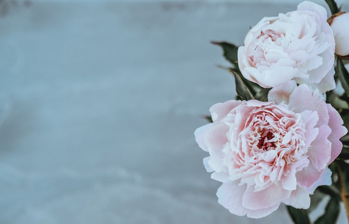 Jolie photo pour fond d'écran photo des fleurs photographie pivoines roses photo parfait pour fond d'écran