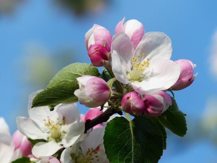 La meilleure image de fleur en branche fleurie printemps fond ecran printemps