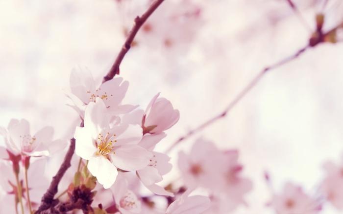 Picturesque fond ecran printemps fond d'écran fleur branche de fleurs pomme printemps