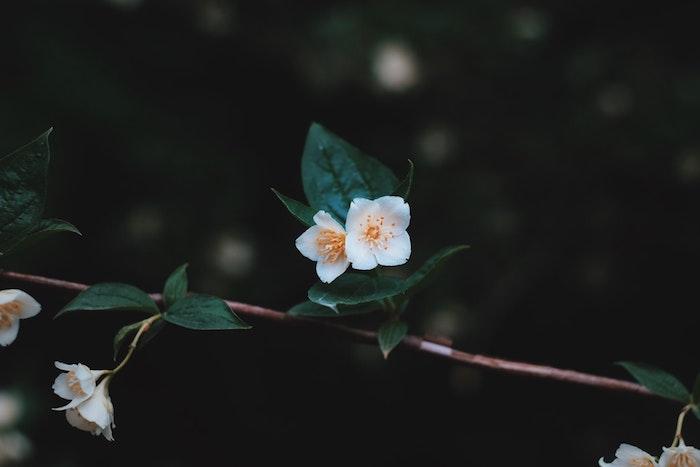 Les photos des fleurs fond écran été gratuit belle fond ecran printemps