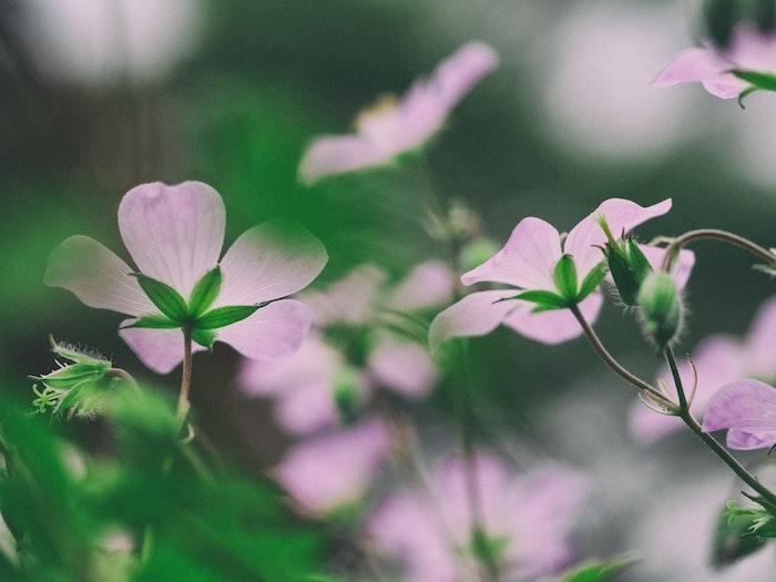 le fond d cran fleur qui donne de grands sourires obsigen. Black Bedroom Furniture Sets. Home Design Ideas