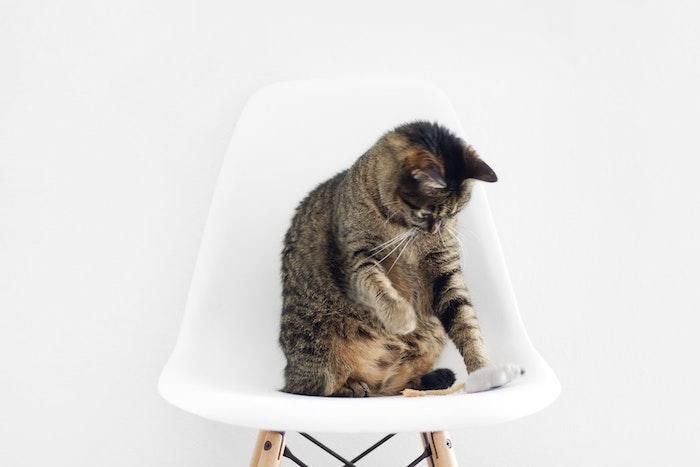 Fond d'écran fun fond d'écran fantastique fond d'écran drôle magnifique chat et rat en peluche