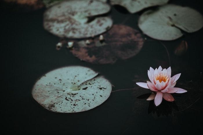 Merveilleux fond d'écran rose fond ecran fleur photo