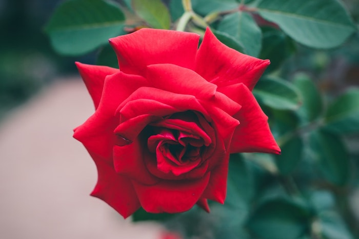 Le Fond D Ecran Fleur Qui Donne De Grands Sourires Obsigen