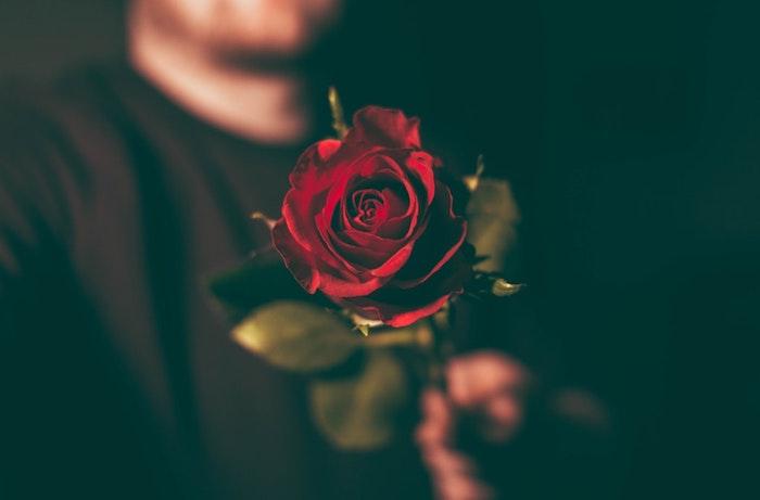 Narcisse fond d'écran jolie fond ecran fleur printemps rose rouge