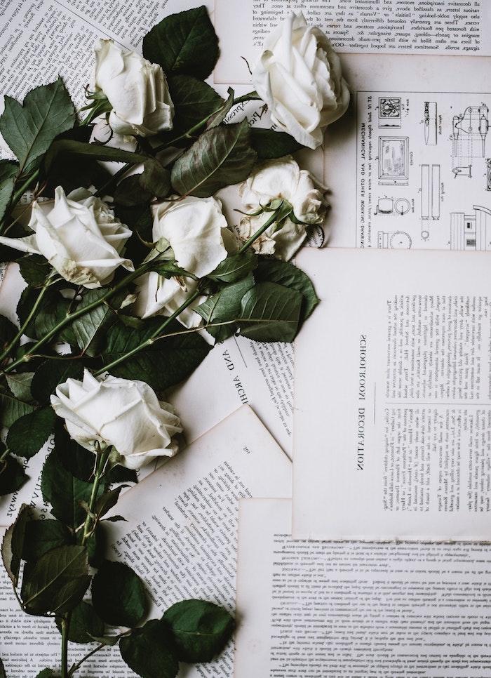 Images arrière plan iphone livre pages et roses blanches fond ecran fleurs d été