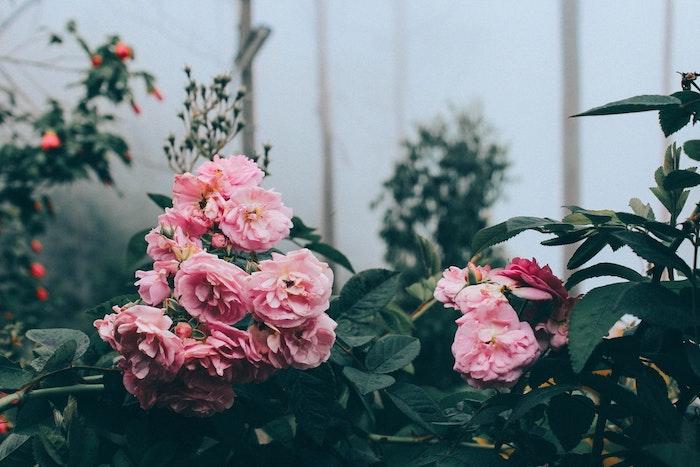 Paysage fond d'écran jolie fond d'écran fleur images fleurs de jardin