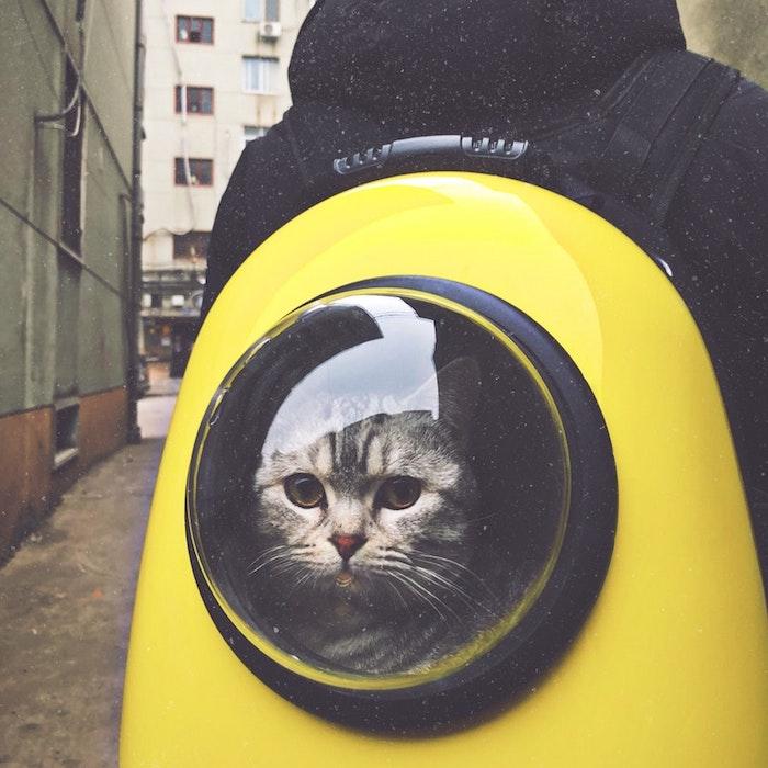 Fantastique fond d'écran animaux mignons photo le plus mignon animal chat dans sac à dos adorable
