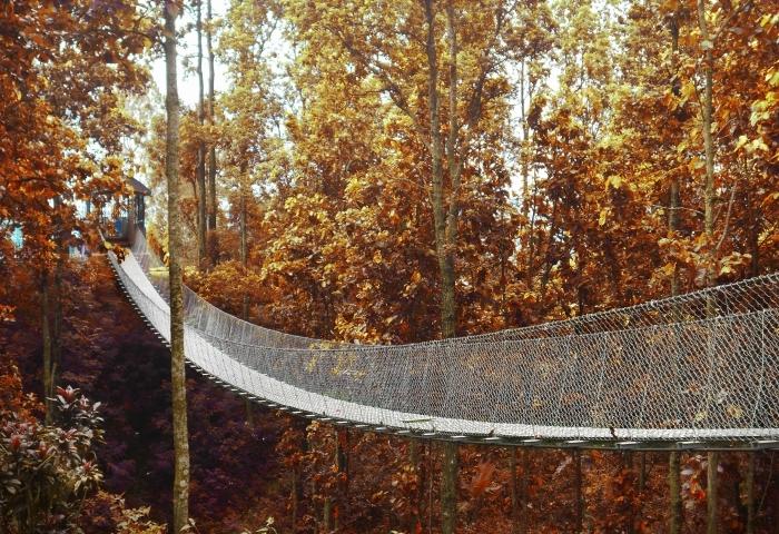 choisir un fond d écran wallpaper naturel, photo de pont dans une foret aux arbres oranges, paysage automnal pour fond d'écran