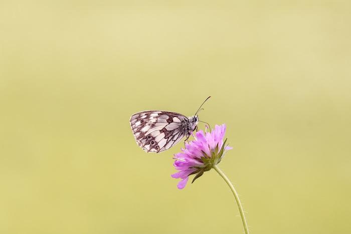 Photo bouquet de fleurs fond d'écran fleur belle papillon et fleur