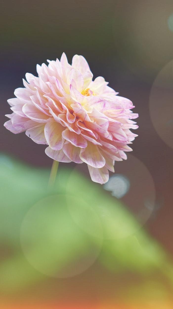Merveilleuse image fond d'écran gratuit printemps fleur jolie