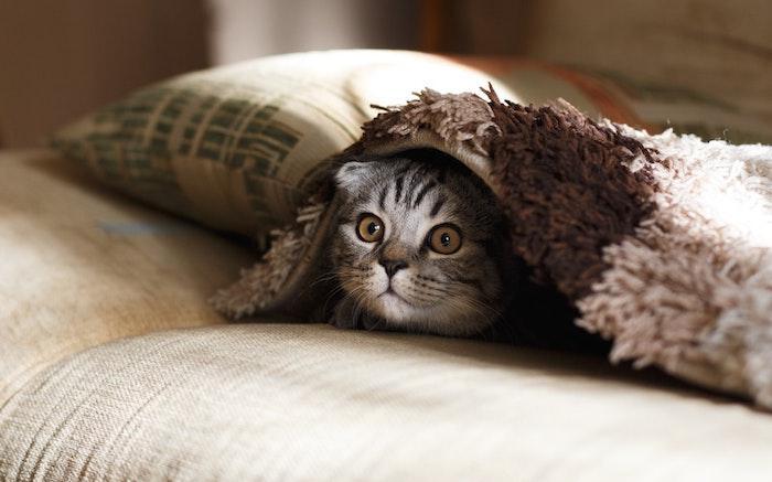 Fond d'écran gratuit pour pc bureau image ecran drole humeur au bureau chat qui se cache sous la couverture