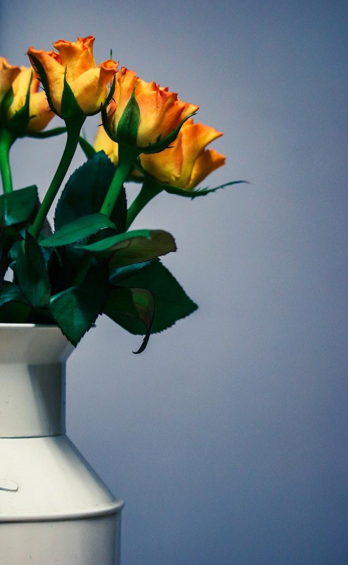 Rose fond d'écran rose rouge fond ecran printemps fleurs jaunes roses