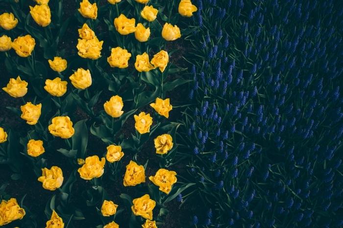 jardin de fleurs jaunes et bleus, fond ecran ordinateur avec fleurs à l'aube, photo de la nature pour un wallpaper ordinateur