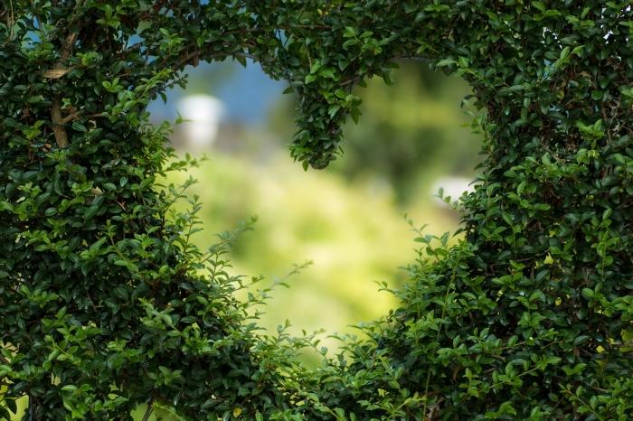 fond ecran gratuit, photo de plantes vertes coupées en forme de coeur, choisir une photo de la nature pour fond d'écran ordinateur