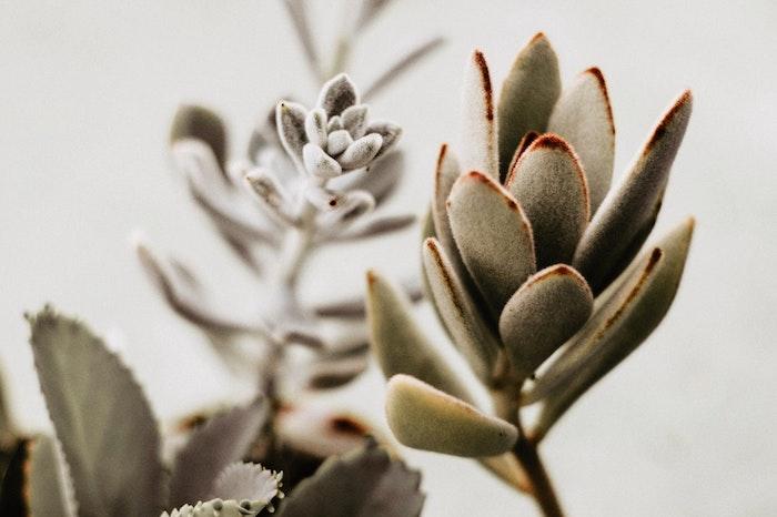 Super image fond d'écran fleurs de printemps gratuit photo belle