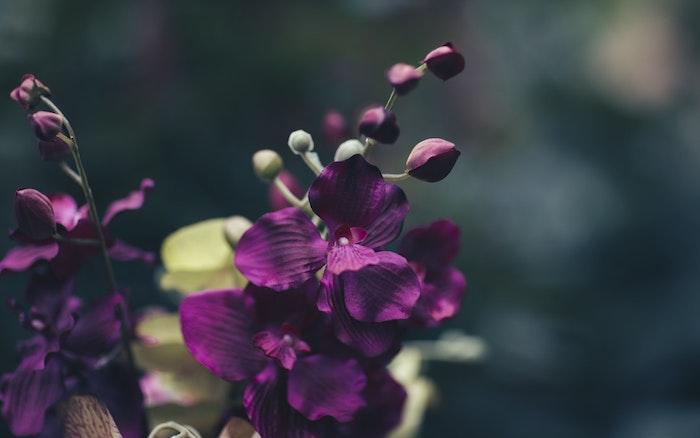 Splendeur images gratuites de fleurs images de belles fleurs gratuites