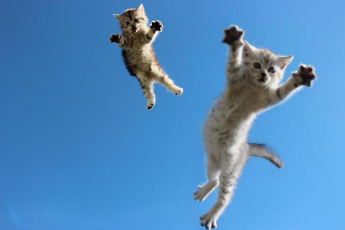 Amusant fond d'écran animaux drole fond d'écran chatons trop mignons hd amusante photo