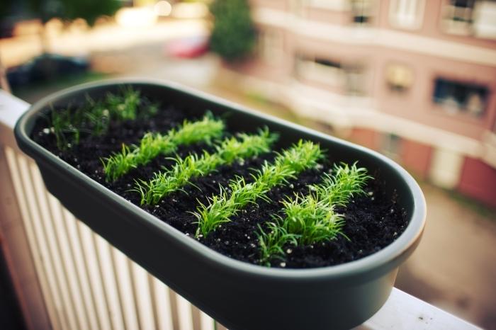 cultivation de légumes et herbes aromatiques dans un pot avec terreau spécial, mini jardin sur balcon ou terrasse