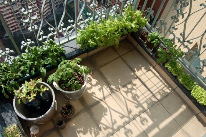 modèle de potager terrasse avec pots, cultivation légumes salades et tomates cerises en pots sur le balcon