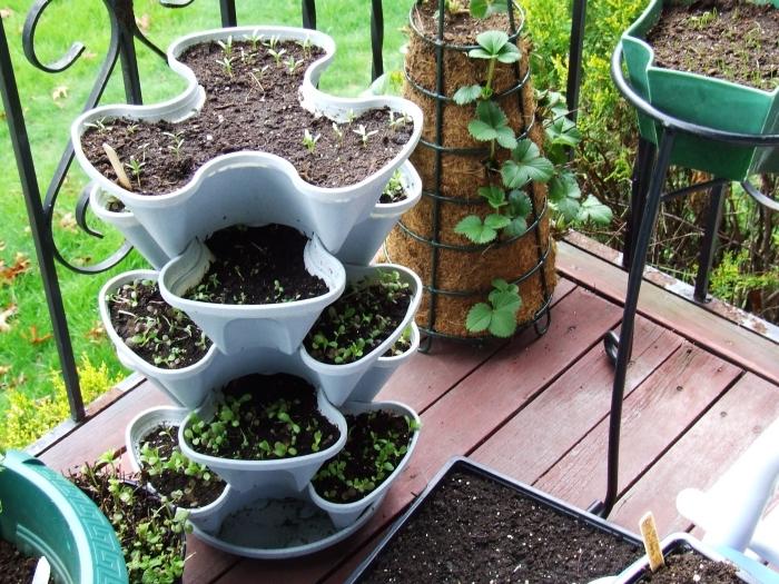 modèle de contenant potager en hauteur design plastique rempli de terreau spécial pour légumes, semis de tomates sur balcon
