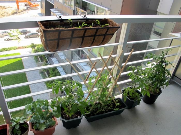 idée pour faire un potager surélevé ou horizontale sur terre dans un petit balcon ou sur terrasse en ville