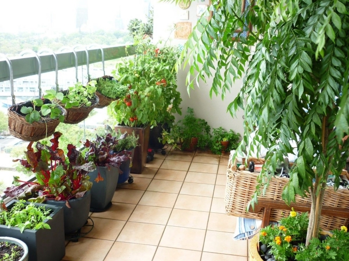 quelles plantes cultiver sur le balcon, légumes et aromatiques en pots grands ou petits remplis avec terreau spécial