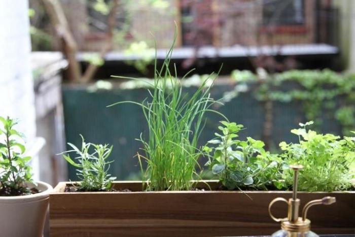 choisir plante balcon à cultiver dans pots avec terreau spécial pour plantes comestibles, exposition au soleil pour légumes