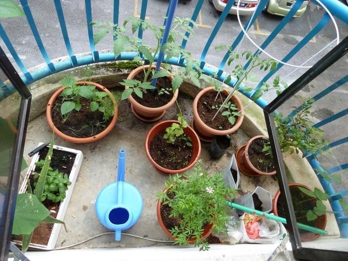 cultiver légumes et aromatiques en pots sur son petit balcon, semer et arroser régulièrement les plantes comestibles