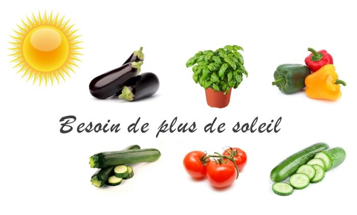 exemples de légumes comme tomates concombres poivrons qui ont besoin de plus de soleil, cultivation plantes dans un appartement