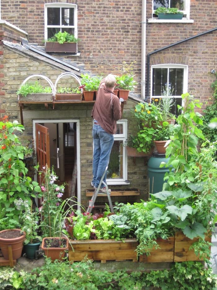 transformation de terrasse en mini potager avec légumes et aromatiques en pots, soins de jardinage en ville