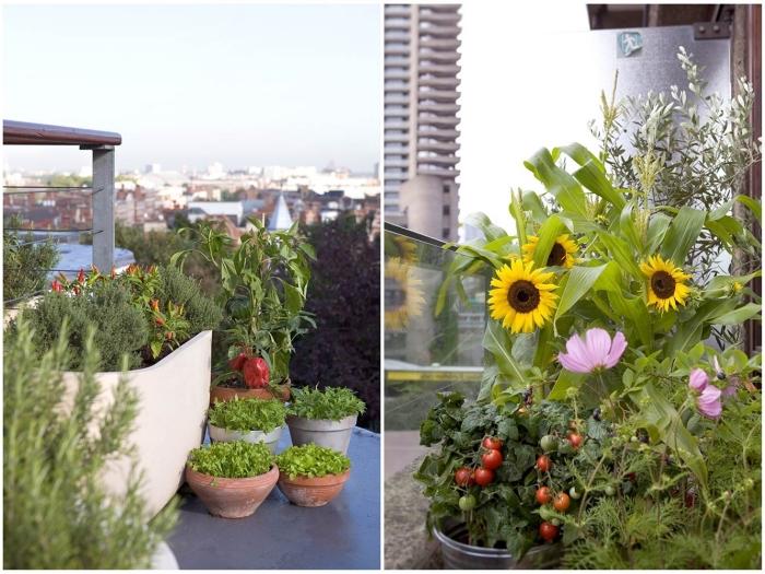 idées quelles plantes cultiver sur son balcon, légumes et plantes aromatiques cultivées en pots sur la terrasse