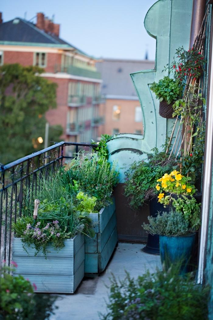 magnifique petit balcon transformé en mini jardin avec plantes comestibles légumes et aromatiques, cultivation légumes en pots