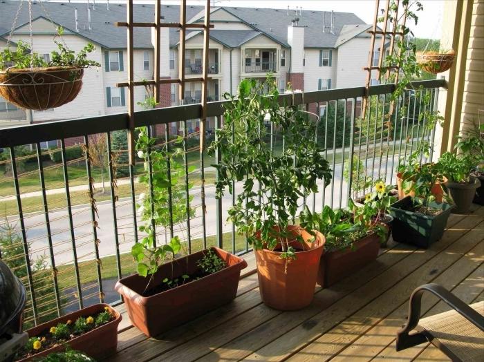 choix plante balcon pour créer un mini jardin urbain avec légumes et aromatiques, déco de terrasse avec plancher de bois