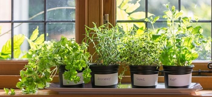 exemple comment cultiver légumes ou plantes aromatiques sur un balcon fermé, herbes dans pots plastiques